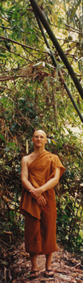 Ajahn Pasanno standing in Dtao Dum Forest