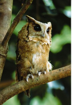owls are just one of many wild animal species that live the Dtoa Dum Jungle
