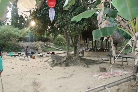 The Kola tree where the earth treasure vase was planted